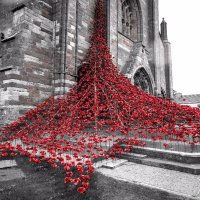 Kirkwall poppies popped square web