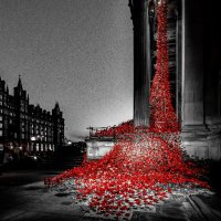 poppies lime street popped