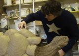 David Creates a Galapagos Tortoise
