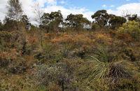 (1) Spring flowers in Western Australia