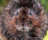 Secret British Mammals (Natures Photos)