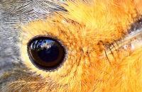 Robin's eye view  (of Brownsea Island tearoom)