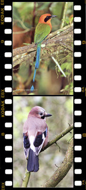 Side Filmstrip 5 Vertical Home page