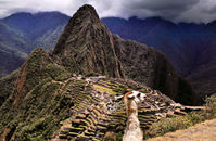 Llama and Machu Picchu