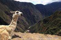Llama's eye view of the valley below Machu Picchu