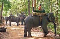 Elephant road block - tiger alert