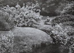 In a Dorset Garden