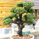 Big Bonsai at Grand Palace..