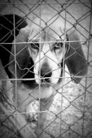 Dog Shelter Skiathos