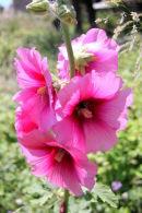 Kastro Flowers