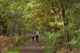 Autumn Walk in Sherwood Forest