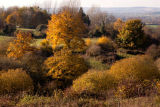 Autumn in the Vale