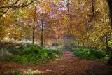Clumber Park  Woods Autumn view