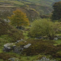 Scot Gate Ash Quarry in Autumn