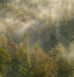 Brandlehow Woods
