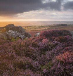 Heather on Nought Moor