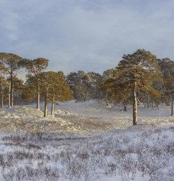 Loch Tulla Pine Forests