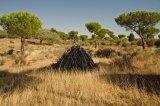 Cut Trees Donana National Park Spain