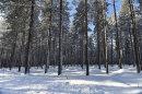Forest near Gunnarsbyn, Sweden