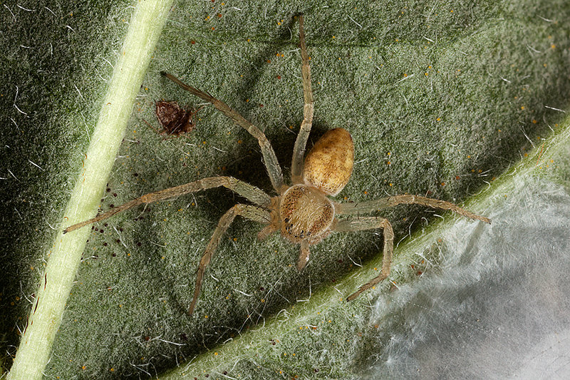 Spider and eggs
