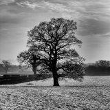 Winter Tree I