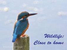 Talk: Wildlife Close To Home