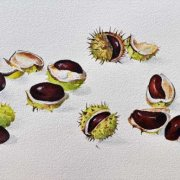 Conkers from Barrow