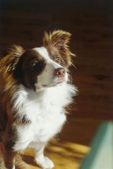 Aiofe the Dog