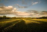 Cornfields Osmanthorpe