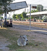 Waiting for the train ?