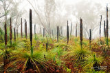 Grass Tree Fog