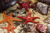 Starfish Gathering