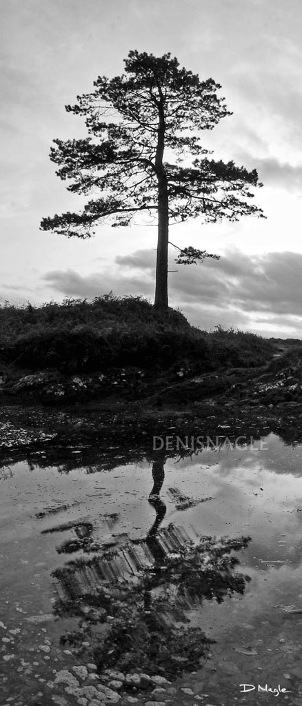 Kenmare Bay , Co. Kerry , Nov ' 07 .