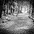 Forest Path, Etang du Sépey, Switzerland 2013