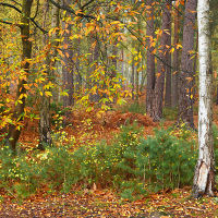 Ockham Woodland