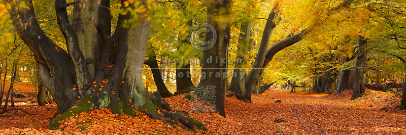 Autumn Woodland - Lady's Walk