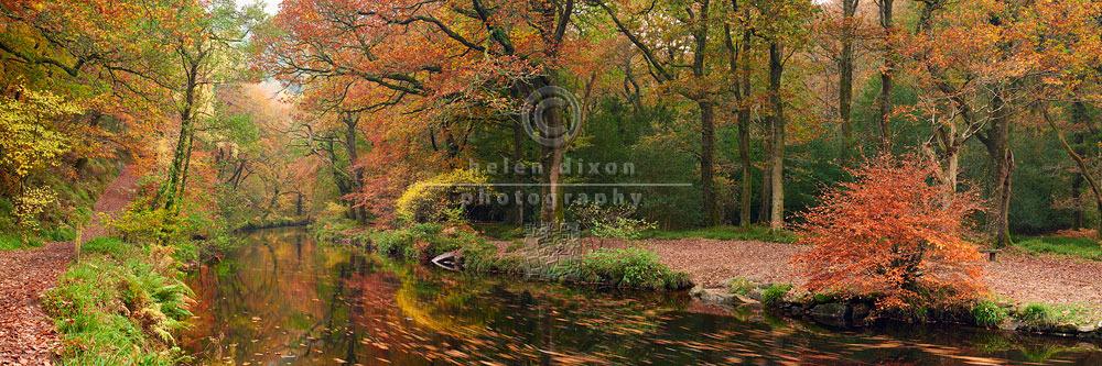 Autumn along the River Teign