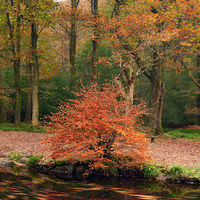 Autumn along the River Teign