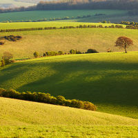 South Downs Countryside