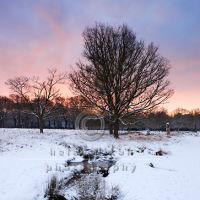Surrey Winter