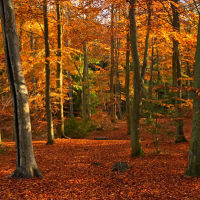 Autumnal Woodland
