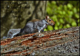 Grey Squirrel at the Photo Shoot site