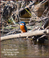 On the Kingfisher trail- Field Signs, habits and a pic! 25th April Wild Spring course