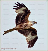 Stunning Kites at Argaty