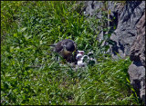 Feeding the chicks - 30 May