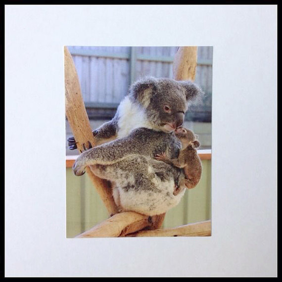 Koala Mother and Joey