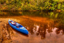 Arthur River in the Tarkine Wilderness