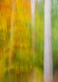 Autumn Wood