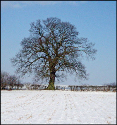 The First Snow of 2009