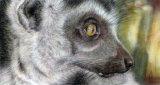 Dying Light - £325 - pastel on velour